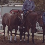 My two show horses tolerating one another in some quality pony time.